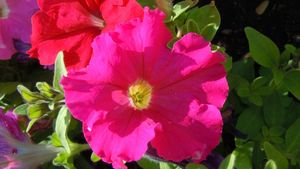 Fleurs012 (51)