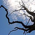 Artzamendi, arbre mort (64)