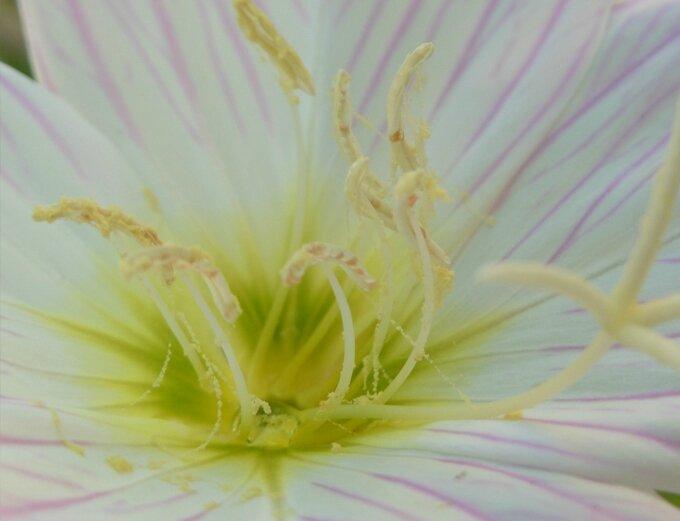 fleur M