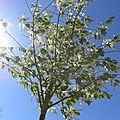 arbre_lumiere (1)