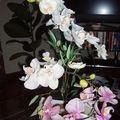 Eternelle orchidée