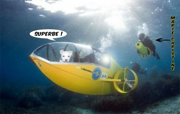 rita-sous marin jaune