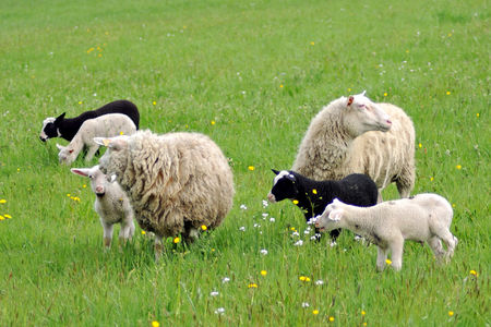 25042009Moutons_0131