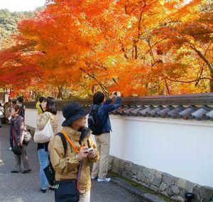 Photographier l'automne 1000