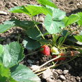 Mon jardin potager