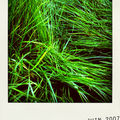 herbe1-pola