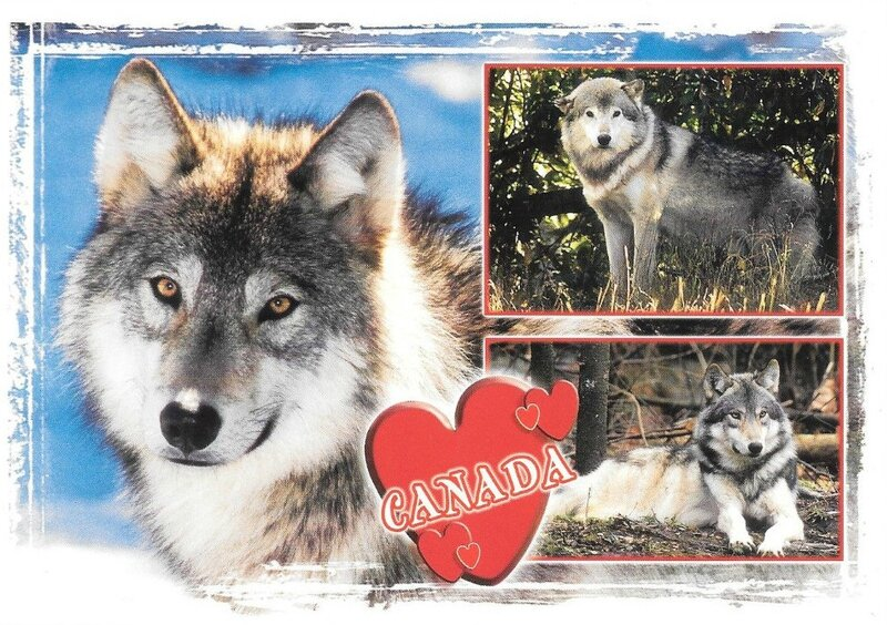 CPM Loup Canada