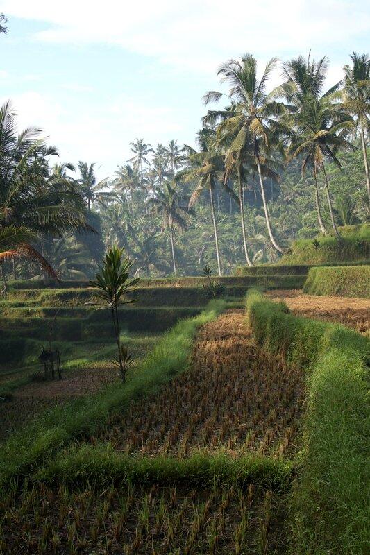Bali 81