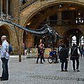 Royaume uni - Londres - Musée d'histoire naturelle