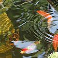 Quelques photos du bassin
