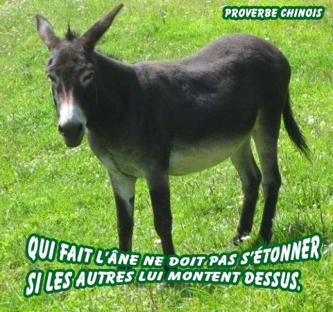 Super Proverbe chinois âne - Gifs, Morphings, Montages en tous genres SW57