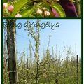 Suivi journalier de la fleur au fruit # 3 et 4