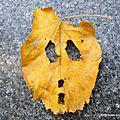Masque d'Halloween naturel ou pas (Lyon, novembre 2017)