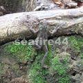 de manzanillo à gandoca_frog_01