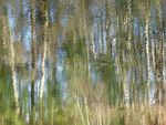 Forêt de rêve