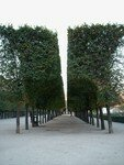 Jardin_du_Palais_Royal__13_