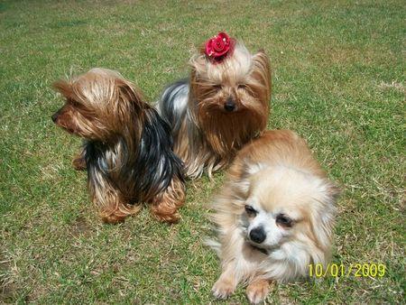 les dernieres photos de la petite famille2011 018