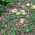 bouchon de cèpe d'été sur une esplanade...