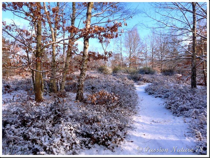 Forêt de Rambouillet sous la neige (25)