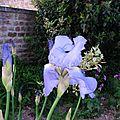 fleurs NY0823 (28)