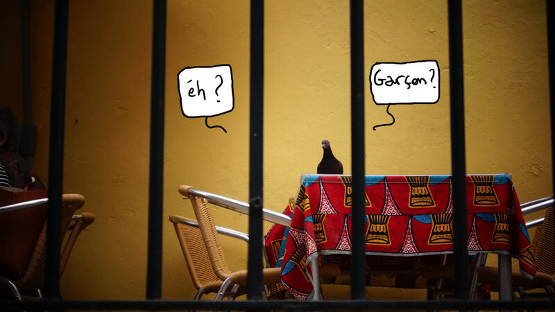 pigeon à table 2