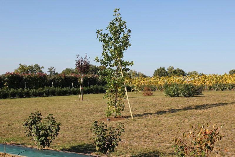D but de plantation d 39 arbres au jardin enchant - Plantation d arbres synonyme ...