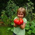 Le temps des récoltes: la tomate du siècle !
