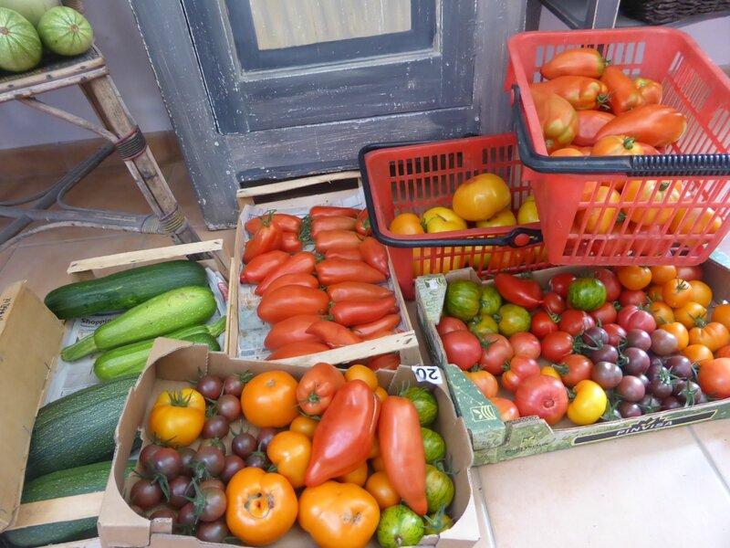 20-tomates et récolte du jour (4)