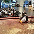 les pinguins s'invitent à l'apéro