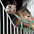 Ecole d'equitation de la forêt de retz #2