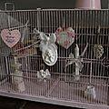 Grande cage rose dragée, Shabby à souhait (3)