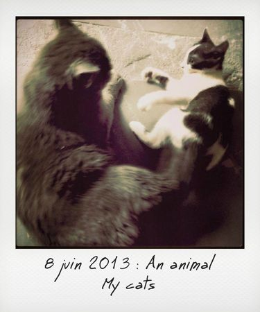 8-an animal_instant