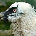 Protection des espèces menacées : le wwf dévoile son palmarès 2013