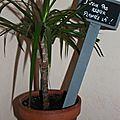 Pic pour plantes