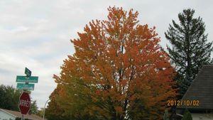 dernier jour feuilles 080