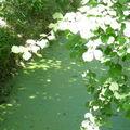 cours d'eau,forêt de l'Illwald
