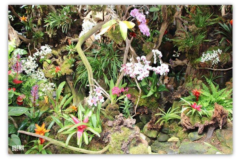 1-tropical-parc-sortie-famille-enfant-kids-bretagne-morbihan-saint-jacut-les-pins-faune-flore-tropicale-animalier-animaux-jardin-spectacle-cactus-bbtma-blog-parents-maman