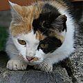 chatte aveyronnaise rencontrée dansq la nature