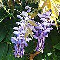 Fleurs de Léon 290816