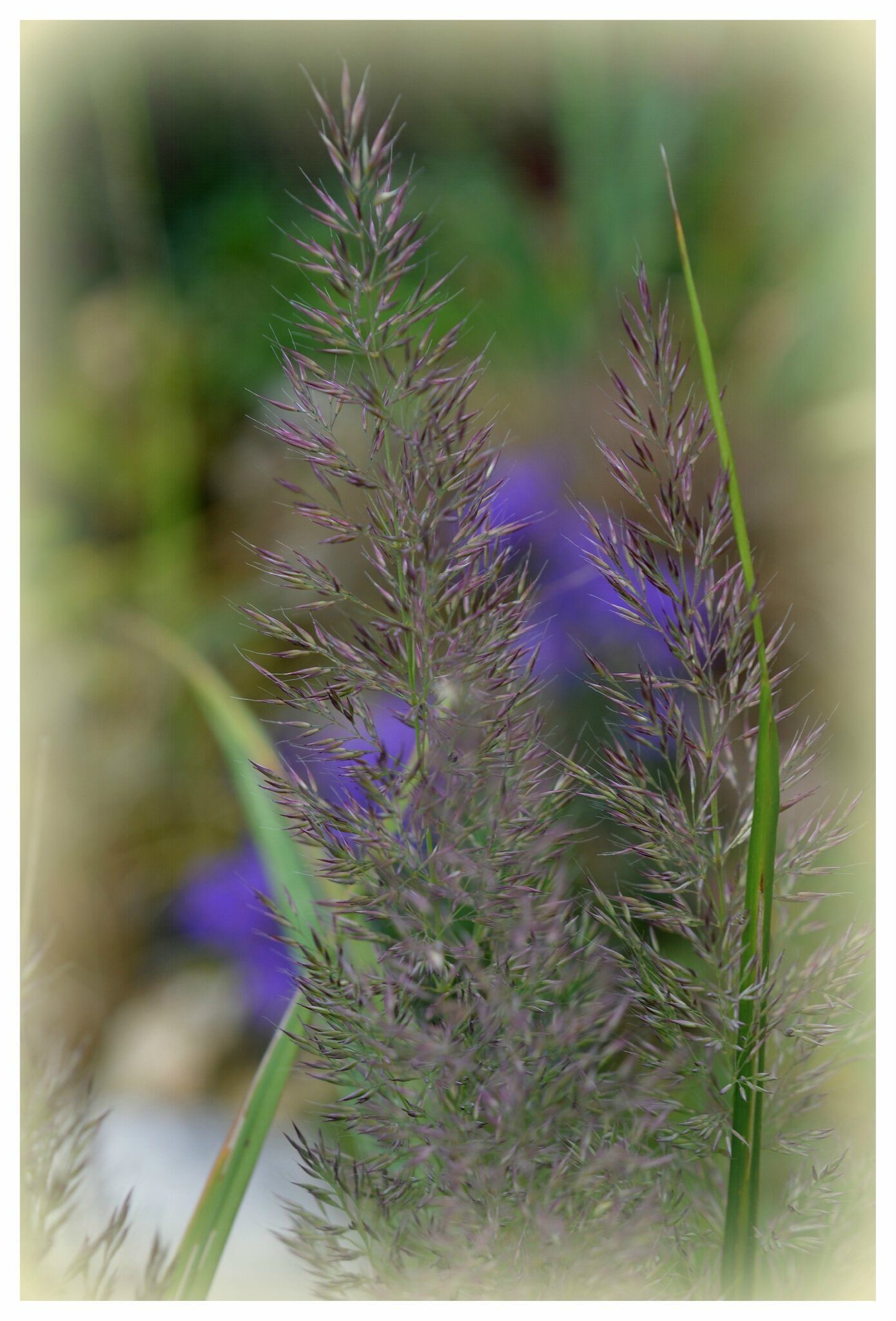 fleurs de septembre - le jardin par passion...