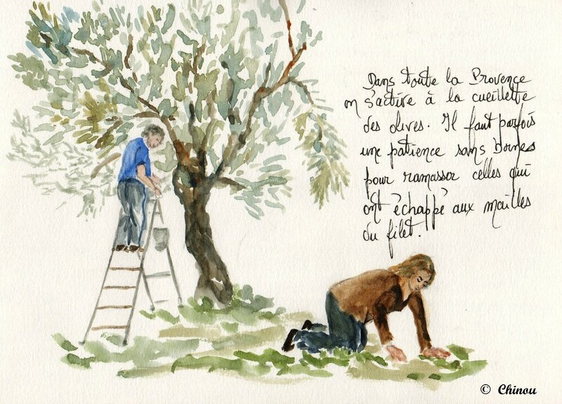 Cueillette d'olives