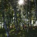 Forêt - Lacs de Carnelle
