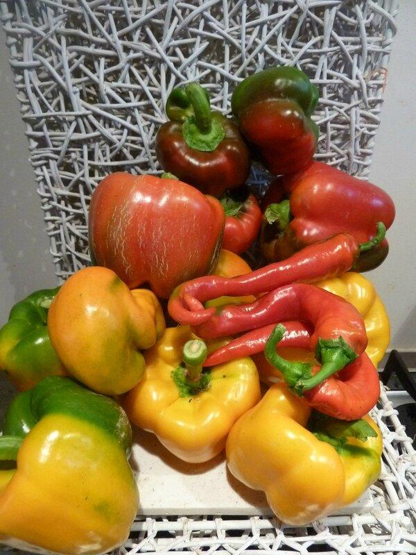 8-poivrons et piments (2)