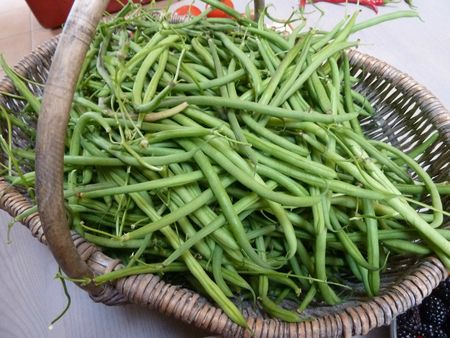 19- haricots verts
