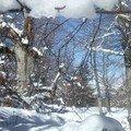 La Forêt enneigée de Gréolières (06)
