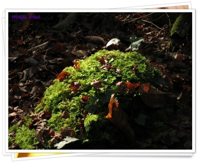 ballade en forêt (8)