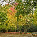 Challenge d'automne bois de guilhou n°2