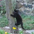 2008 07 29 Un chaton qui grimpe a l'arbre