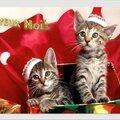 Bonnes et heureuses fêtes à tous !