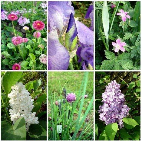 Fleurs_avril_07